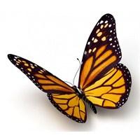 Kelebek Ömrü Kadar