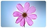 Çiçekler Gerçekten Evin Havasını Temizler Mi?