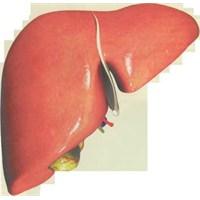 Karaciğer Hastalıkları Hakkında Bilgiler