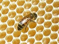 Arılar Niçin Bal Yapar?