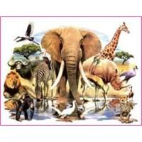 Hayvanlar Hakkında Bilinmeyenler