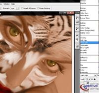 Photoshop İle Kedi Kız Manipulasyonu Yapalım