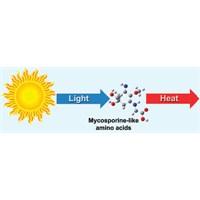 Doğal Güneş Kreminin Gizemi Çözüldü