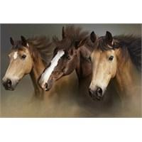 Atlarla Gelen Sağlık