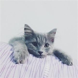14 problemen die alleen cat owners begrijpen!