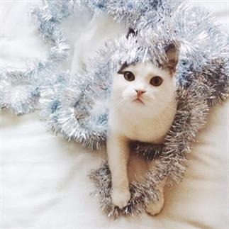 Catproof kerst-decoratie
