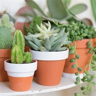 Buitenleven | Low budget tuin en balkon tips