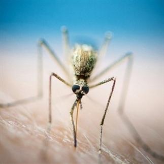 Jeuk van muggenbult? Probeer dit!