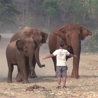 Uniek! Man roept een olifant en dan...