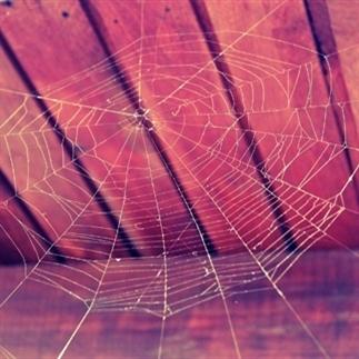 Tip: Geen spinnen meer in huis?
