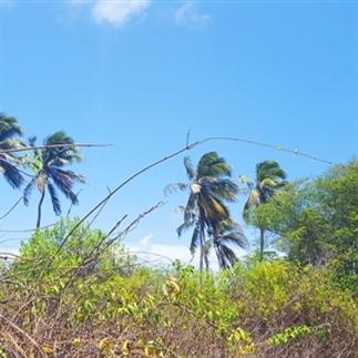 Wonen op Curacao | De nadelen
