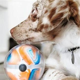 Kickstarter Monday: houd je huisdier in de gaten