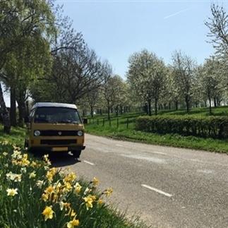 Ultieme lente-activiteit: Bloesemtocht rijden