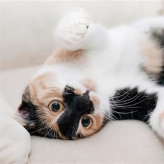 10 hittegolf-tips voor katten.