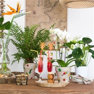 Tropical sfeer in huis - Urban Jungle Bloggers