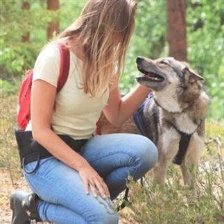 Voor op je bucketlist: Wandelen met husky's in Zwe