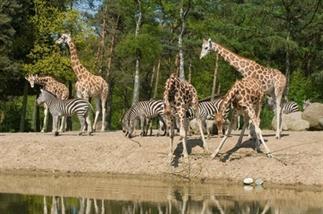 Dierentuin Arnhem: Een dagje naar Burgers' Zoo