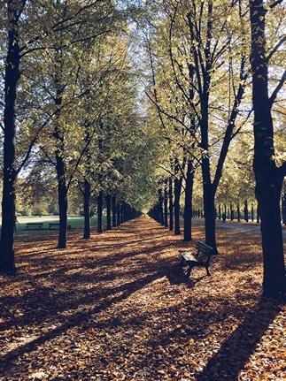 Herfst in Hannover: 10 x de leukste iPhone foto's