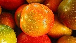 Tomaten die groeien met zonlicht en zeewater