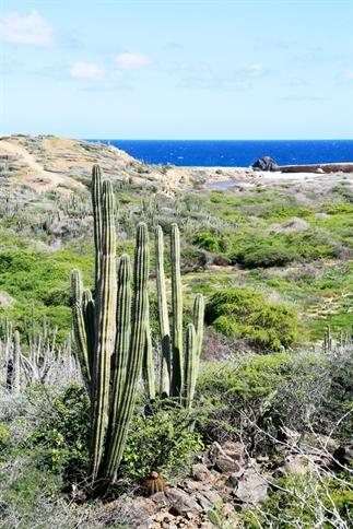 Aruba, jeeptour langs de ruige noordkust