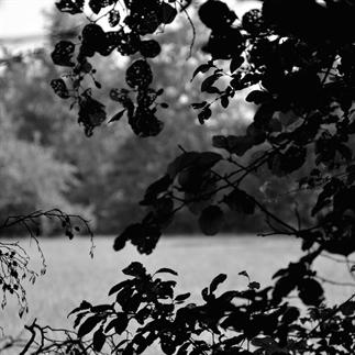 Botanical captures II