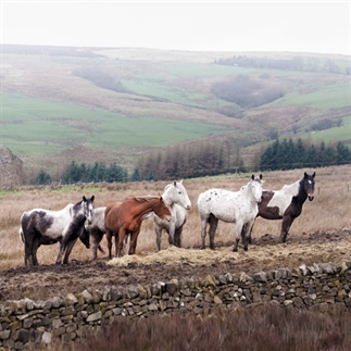 Peak District - Engeland & fotobewerking tips!