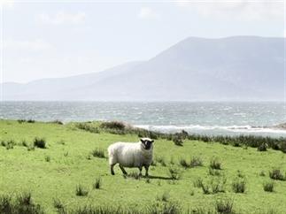 Zuid-West Ierland & de Wild Atlantic Way