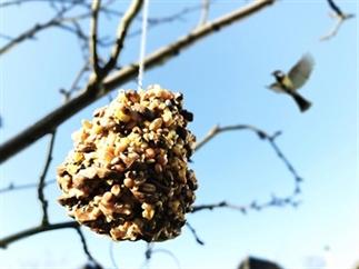 DIY: Vogelvoer dennenappel maken met kinderen