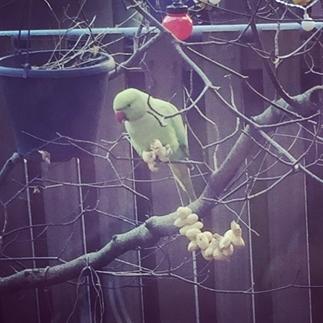 DIY vogelvoer maken
