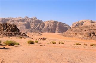 Jordanië | De woestijn in bij Wadi Rum