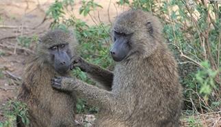 Speeltuin van de bavianen