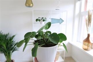Tips voor groen in je interieur