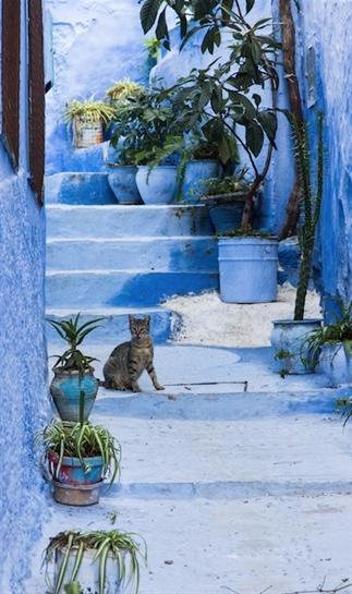 Wauw! Chefchaouen, het blauwe stadje van Marokko
