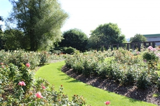 Aanrader: de Botanic Gardens in Belfast