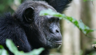 De beste plekken voor een chimp tracking