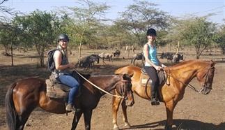 Tanzania te paard