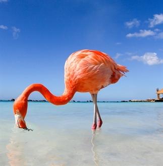 Top 5: de mooiste stranden van Aruba