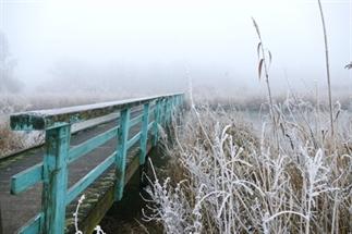 Winterse kiekjes van de Oostvaardersplassen