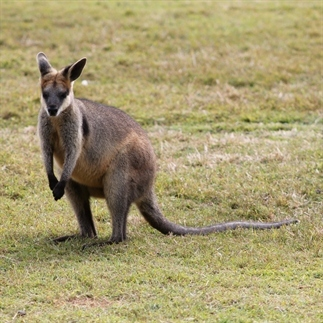 6 dingen die ik niet wist over Australië