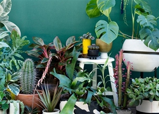 Deze 5 planten zijn beter & leuker dan de cactus