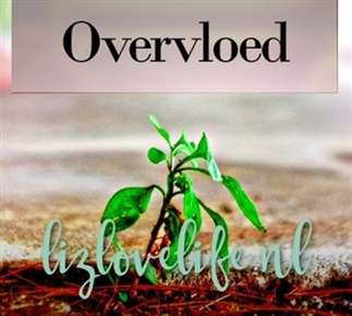 Law of attraction – Overvloed