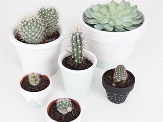 Planten Potjes DIY