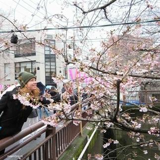 Reisverslag (kersenbloesemfeest in) Japan