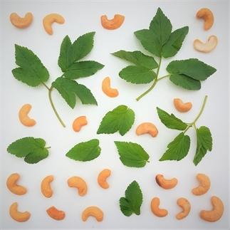 Maak je eigen pesto met onkruid uit de tuin