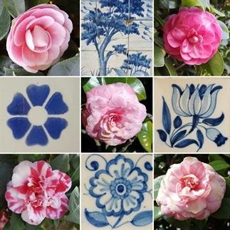Porto: stad van azulejos en camelia's