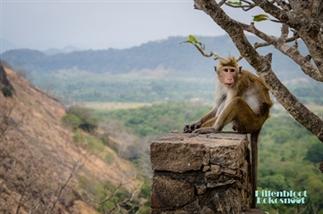 Reisvideo: Sri Lanka