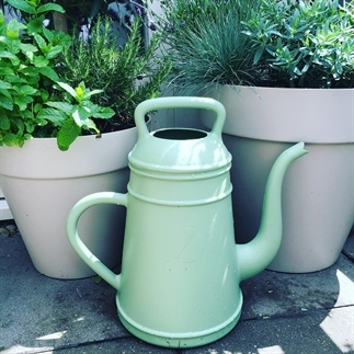 Buitenleven | 6x tips tuinplanten water geven