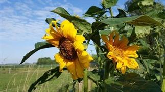 Dé formule voor meer zonnebloemen in je leven