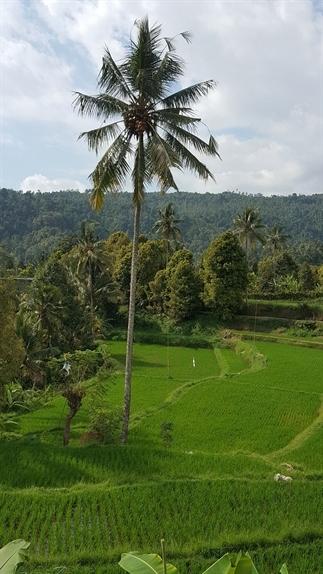 Onze reis door Bali