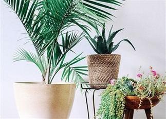 Welke plant hoort in welke kamer?